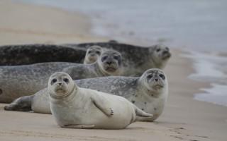 seals_wells